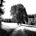 Waldweg-zeichn
